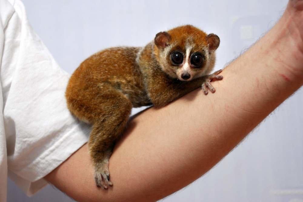 экзотические животные для дома фото с названиями открытия урана