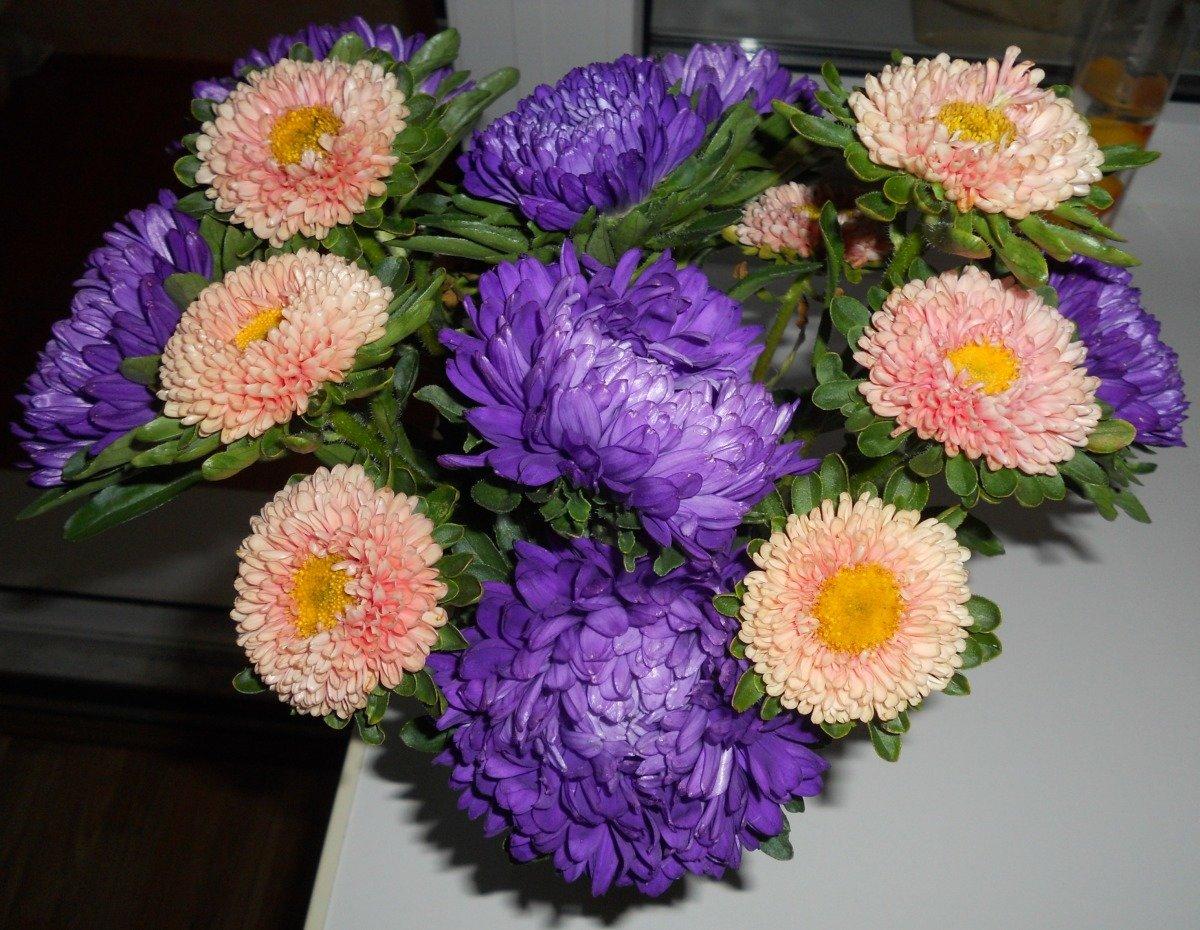 Картинки букетов цветов астры
