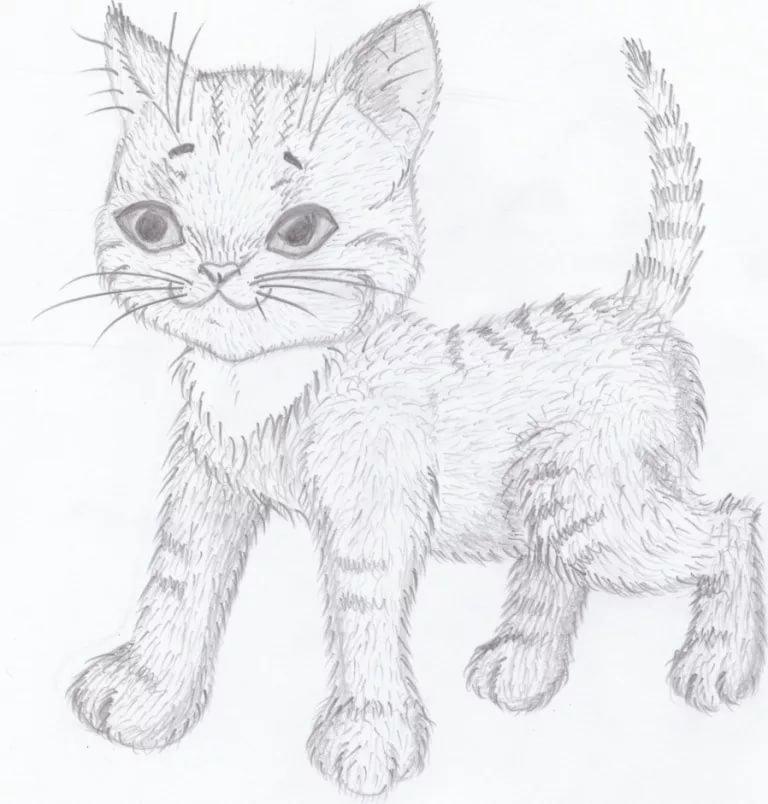 все картинки нарисованых котят чаборок красив любую