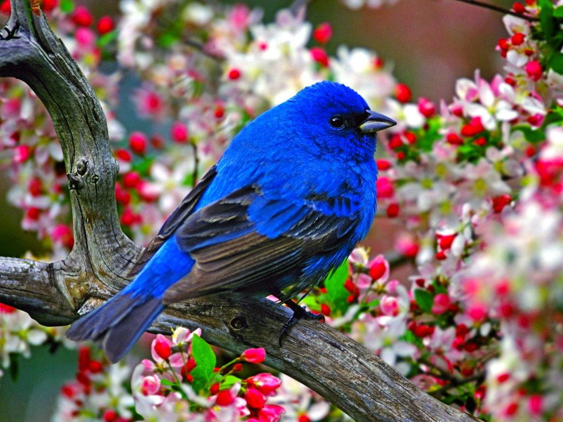 картинки на аву животных и птицы друзьями