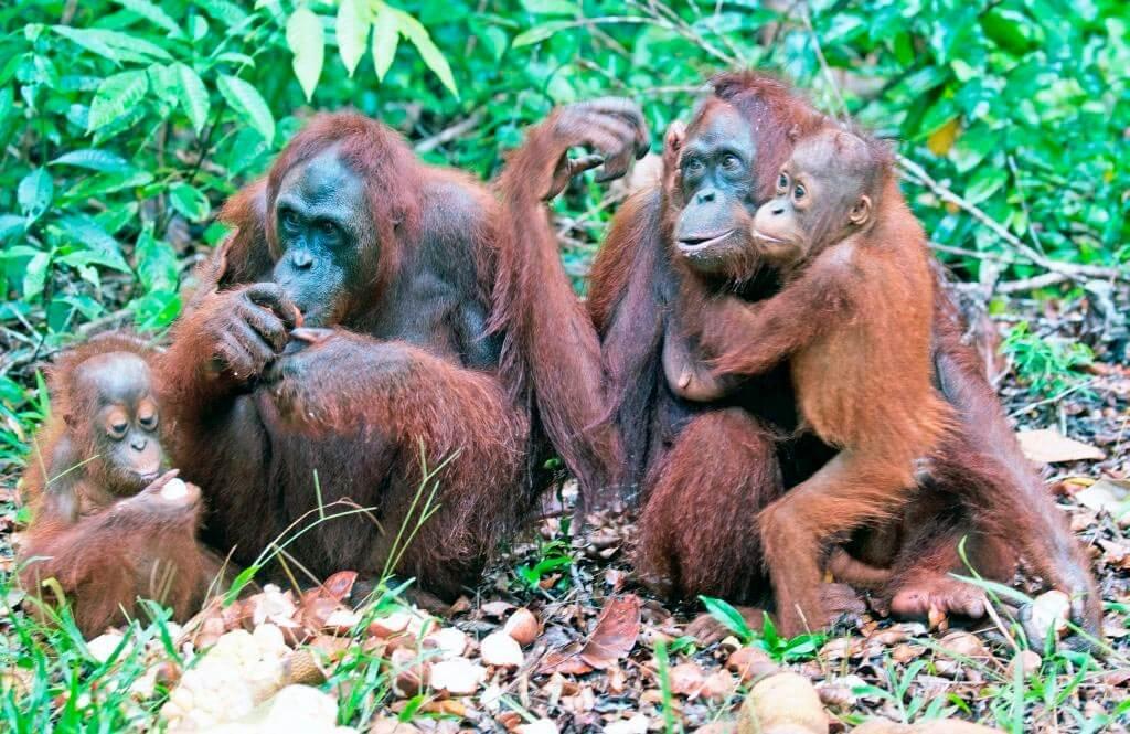 вот картинки группы обезьян дверные