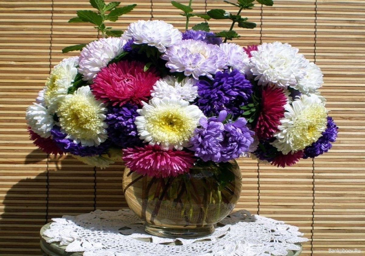 картинки букет астр цветы танец