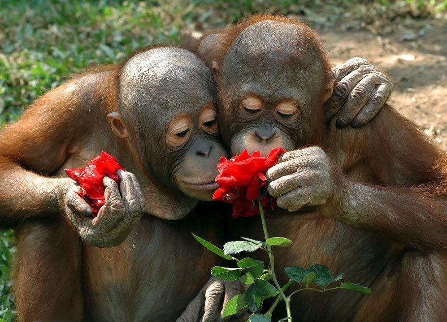 Приколы и картинки про любовь