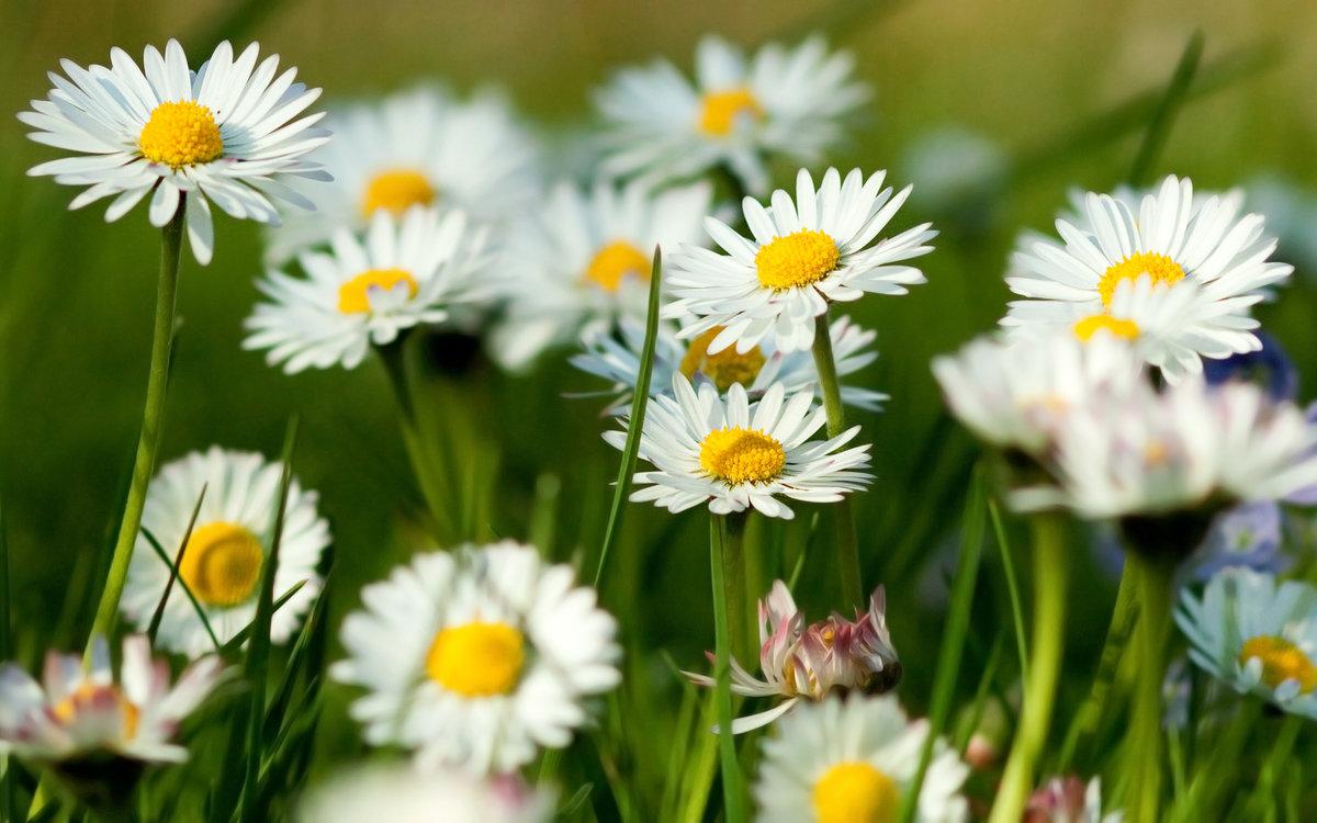 Лето цветы открытки