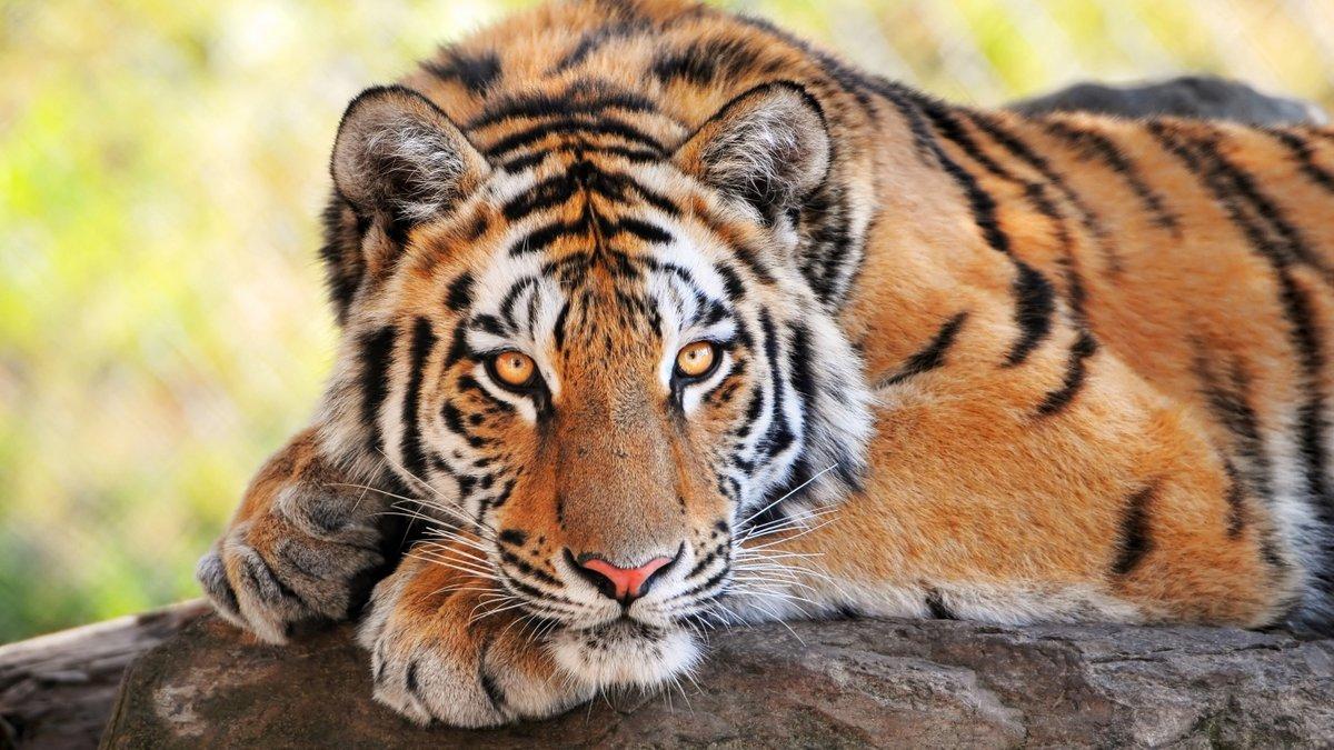 Дню, лучшие картинки о животных