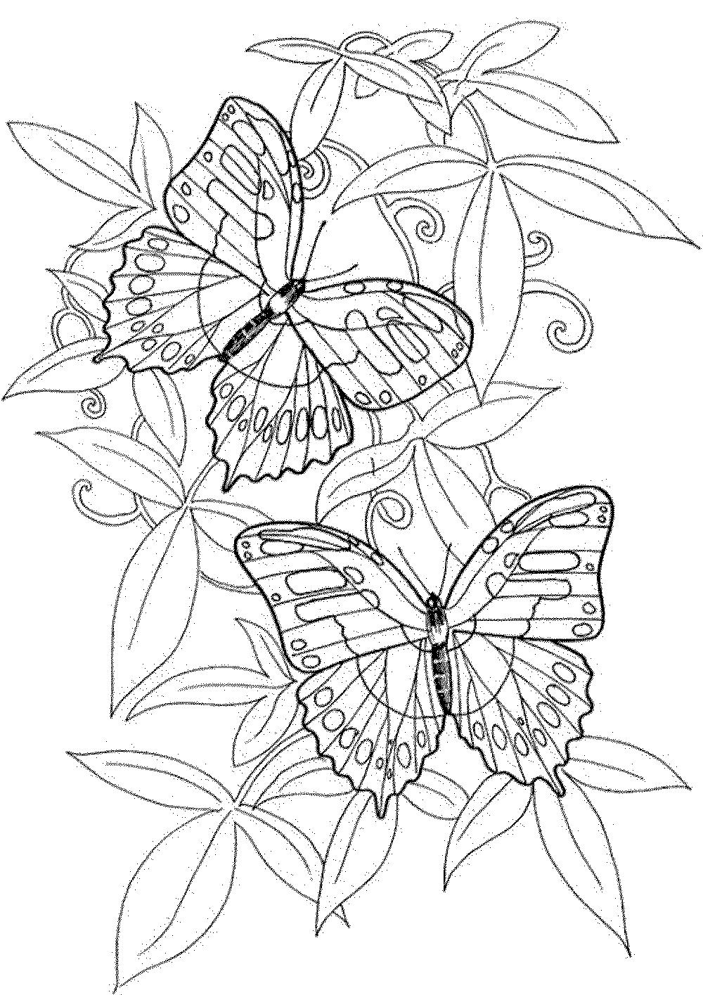 «раскраска бабочки и цветы» — карточка пользователя марина ...