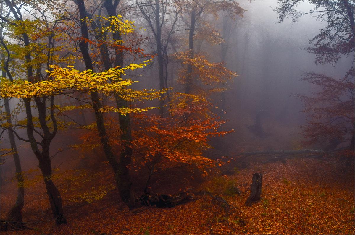 Туманная тишина в осеннем лесу.