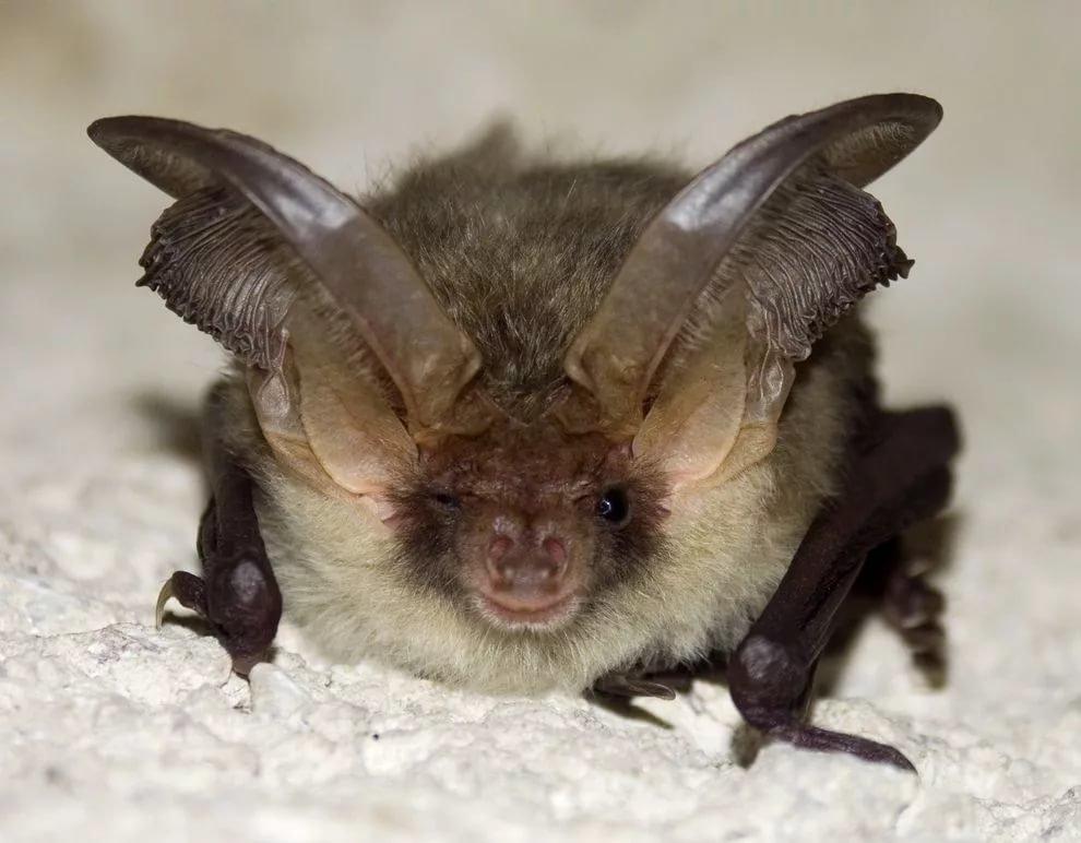 Открытки, смешные картинки летучих мышей