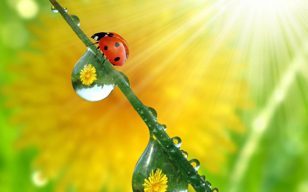 Днем, позитивные открытки солнечные