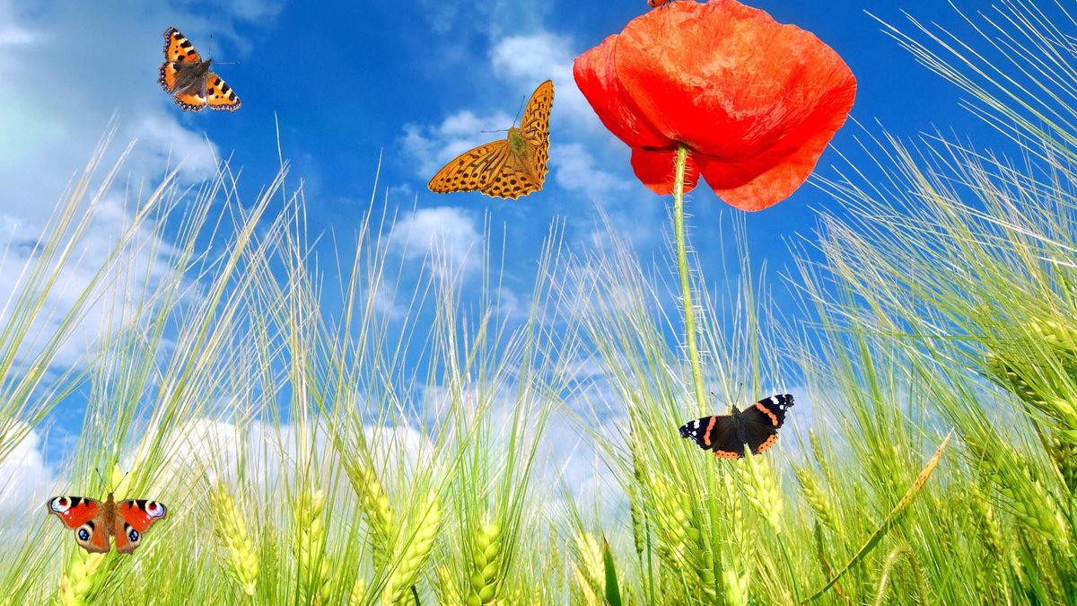 Сундет той, прикольные открытки с бабочками