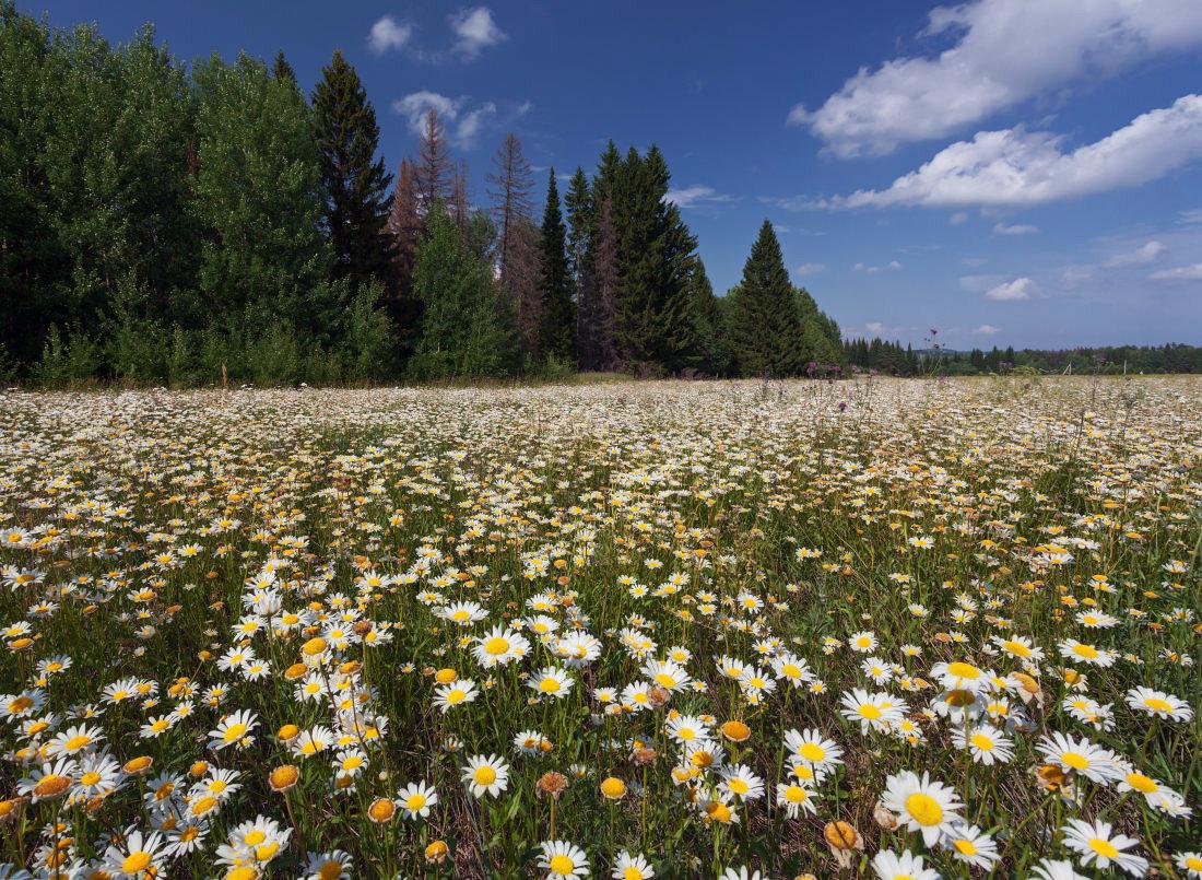 здоровым поляны урала фото лесенка