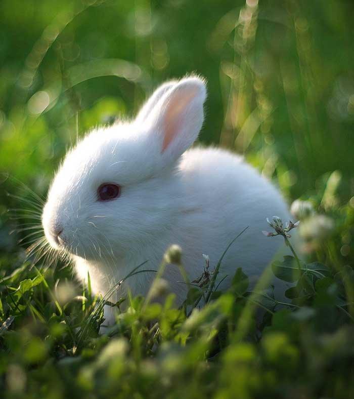 Белый зайчик картинки