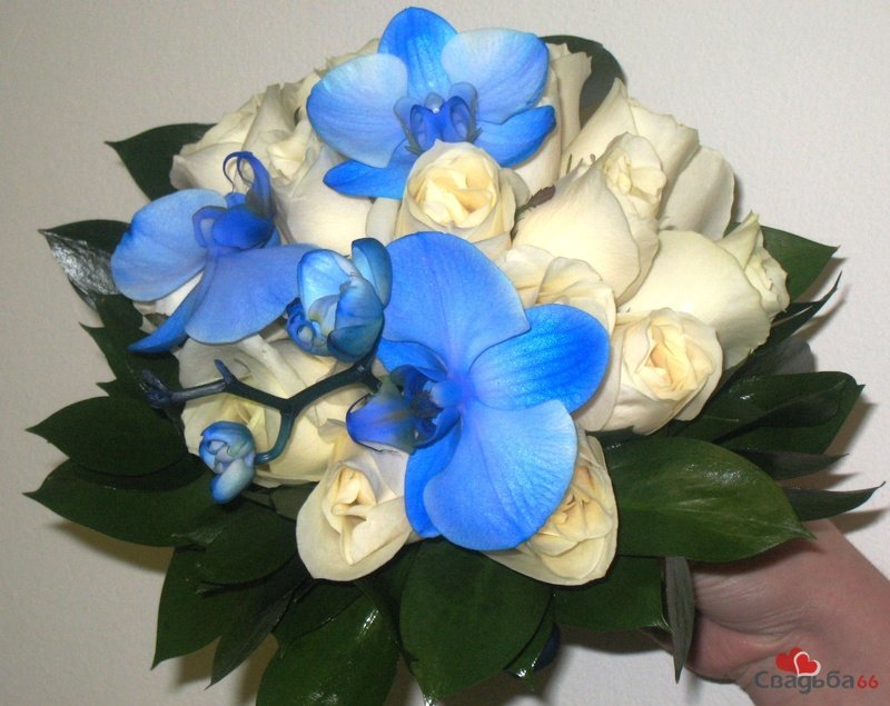 Букеты из синих орхидей спб
