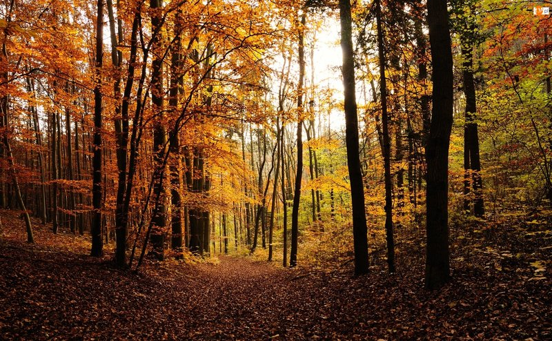 листопад в лесу