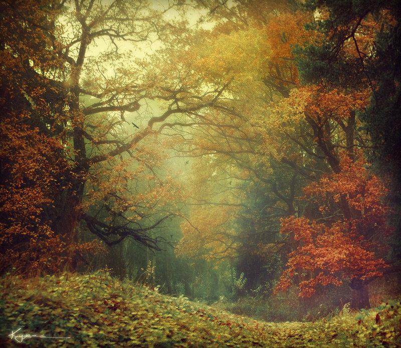 Чедесный осенний лес и туман.