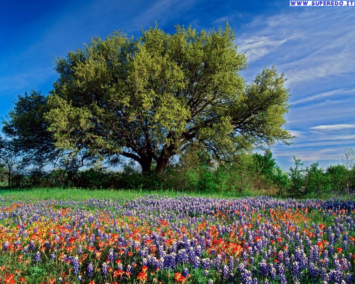 ... Texas Hill Country Desktop Wallpaper Wallpapersafari 2016 Ca