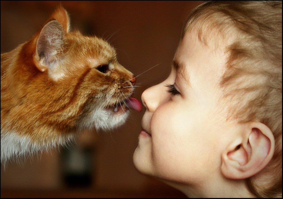 Смешные картинки про детей и котят, добрые открытки