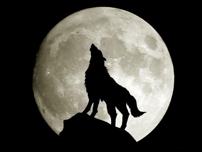 «волк воет на Луну» — карточка пользователя avia в Яндекс ...
