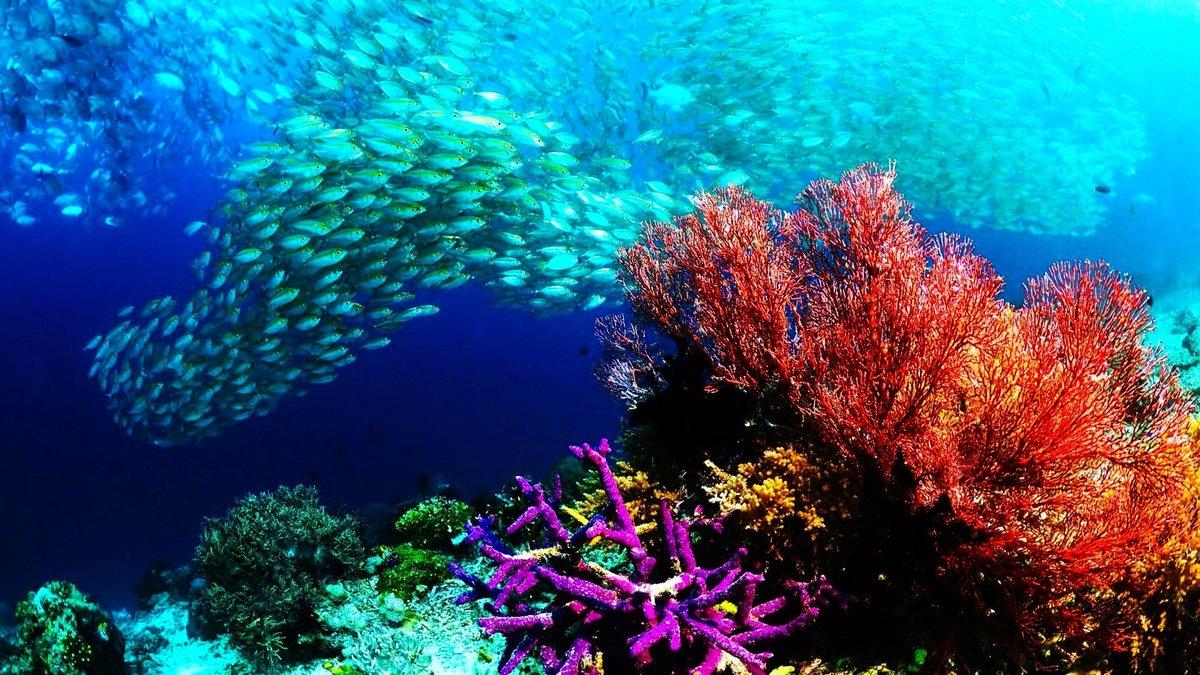 обзавестись здесь картинки подводный мир океана этом районе подвесной