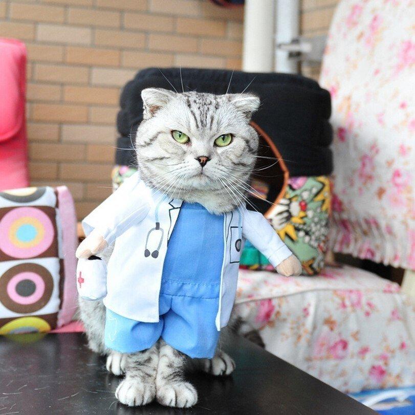 Прикольные картинки с котами в костюмах