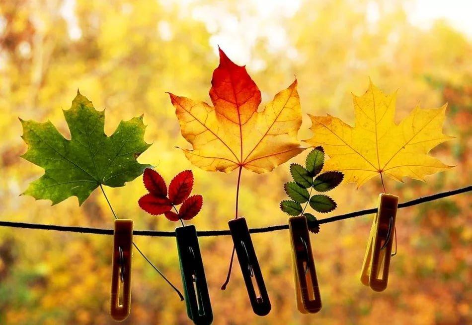 Слова, солнечная осень картинки смешные
