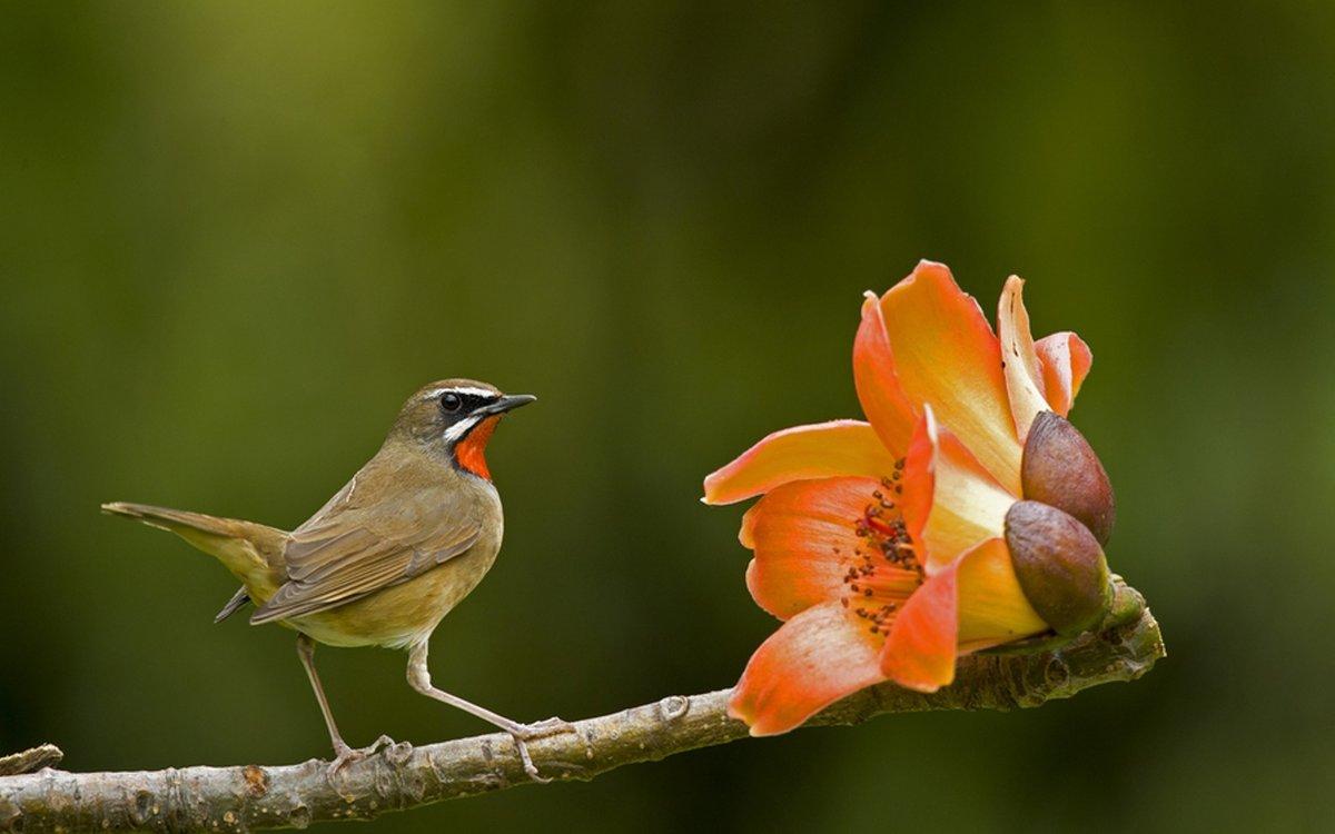 допускаю небрежностей птица с цветком картинки новый год