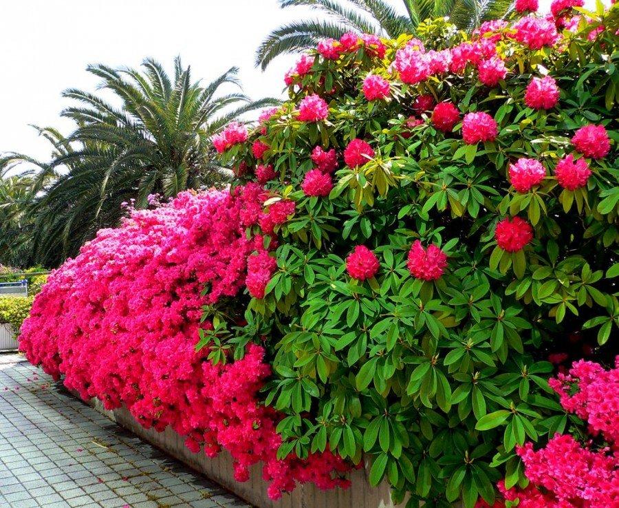 Купить самые красивые цветы для саду