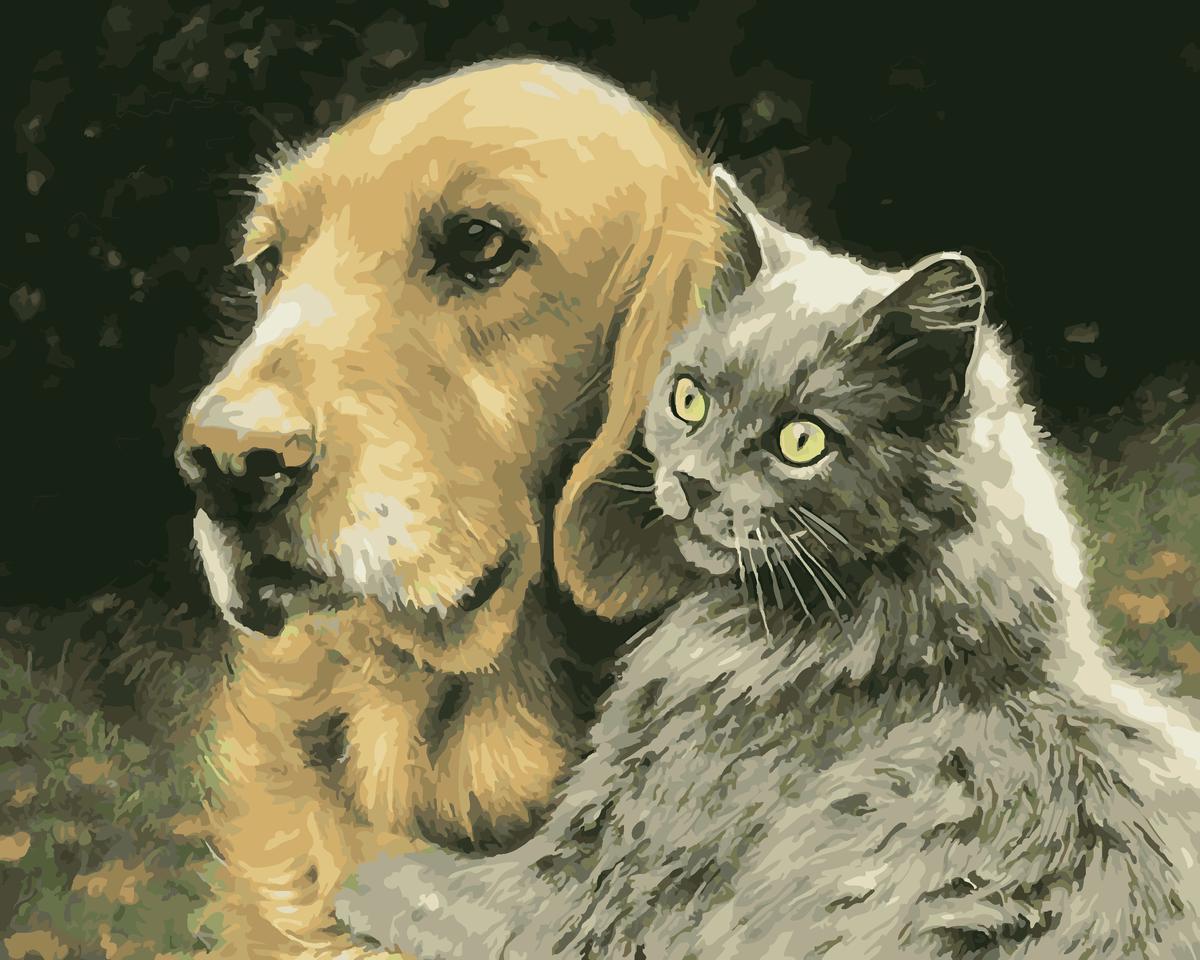Приколы, открытки животные собаки и кошки