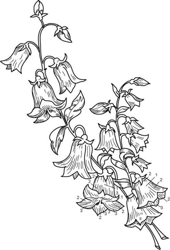 красивые рисунки колокольчиков не цветов там видели