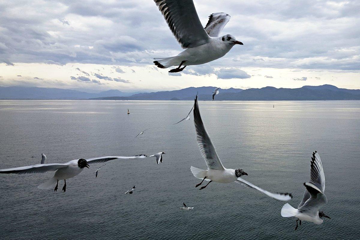 природа картинки чайки снимать близкого расстояния