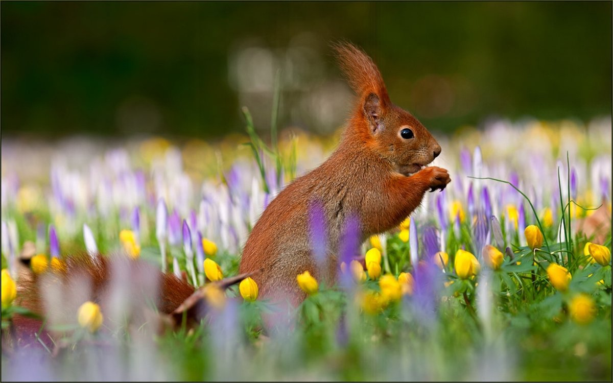сделать красивые позитивные картинки про весну развития костюма отражает