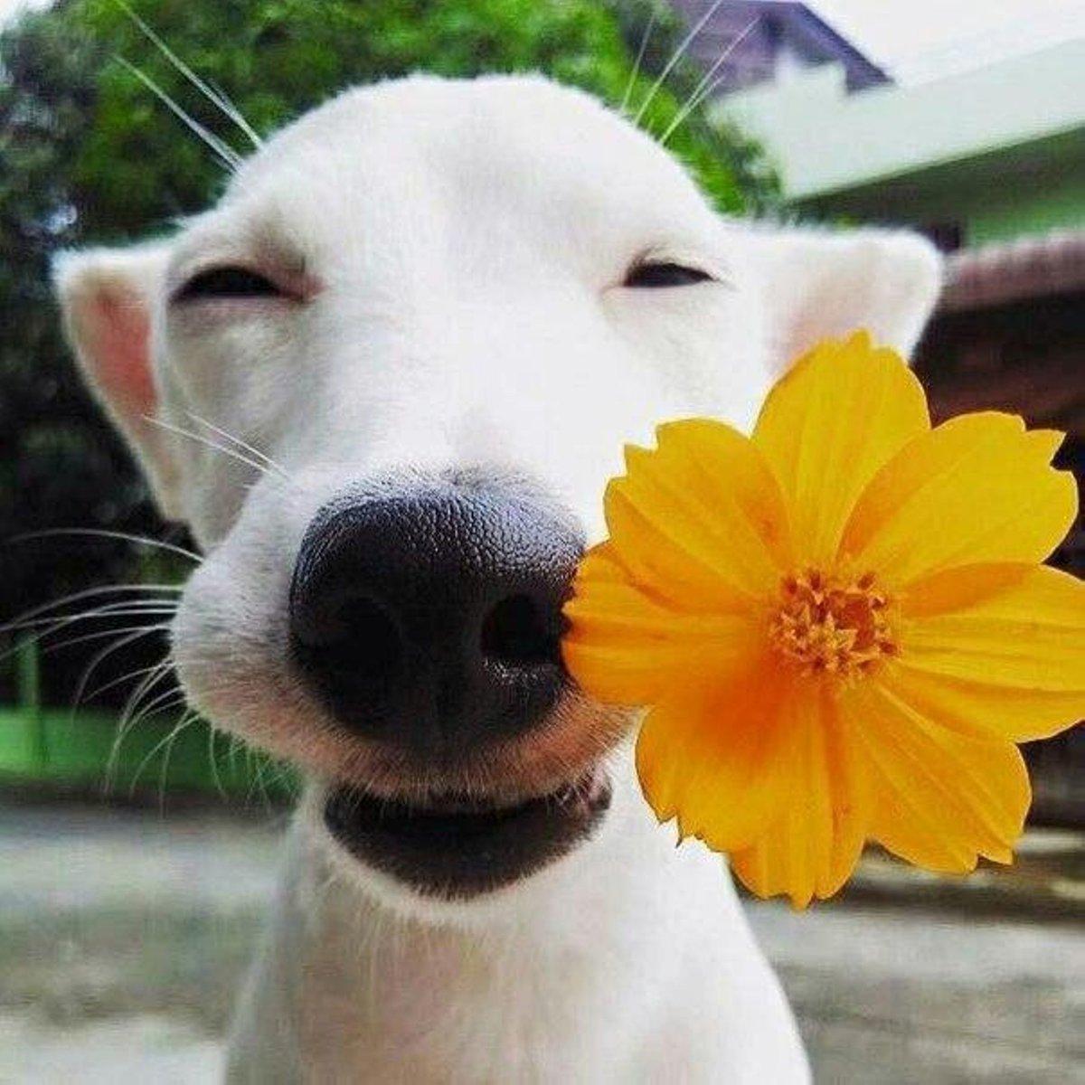 Шаров день, картинки смешные позитивные хорошего дня