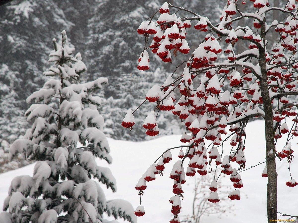 Картинки по запросу зима природа