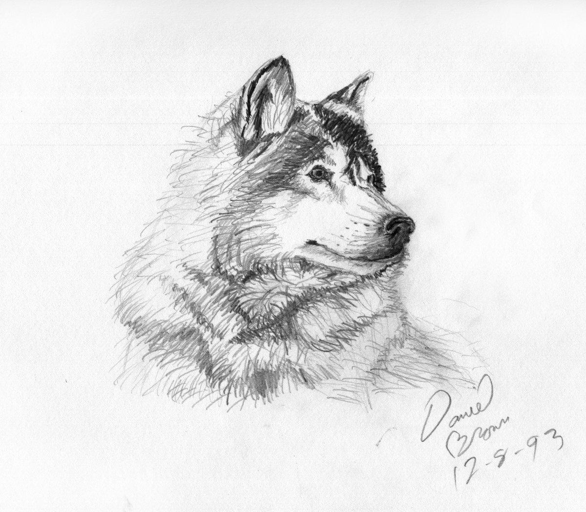Открытка другу, картинки красивые животных карандашом