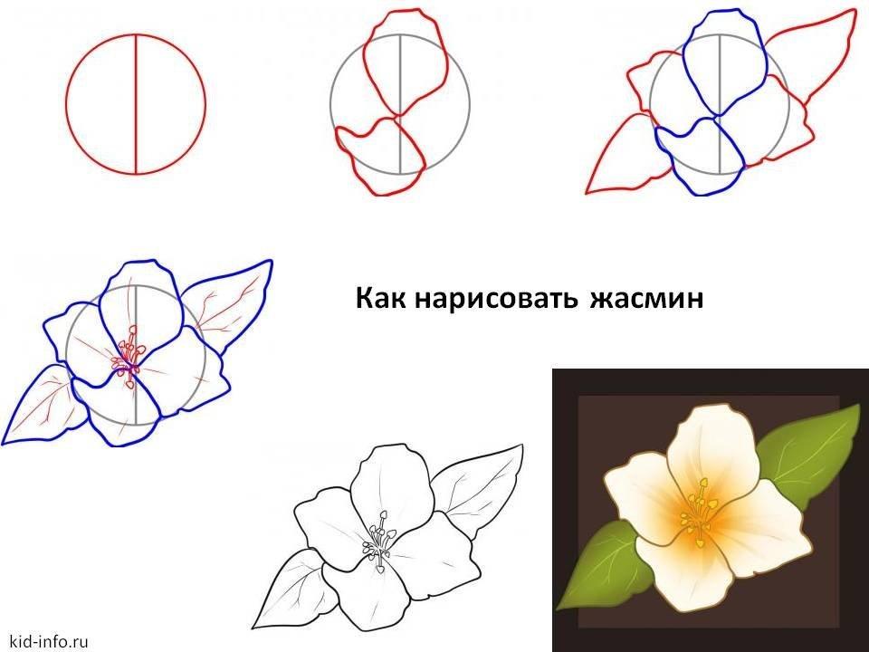 Картинки поэтапно цветы, картинки гадалки смешные