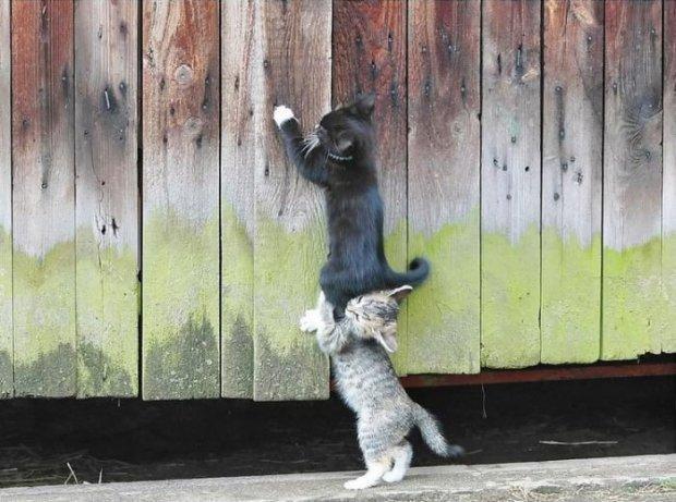 Два друга играют.