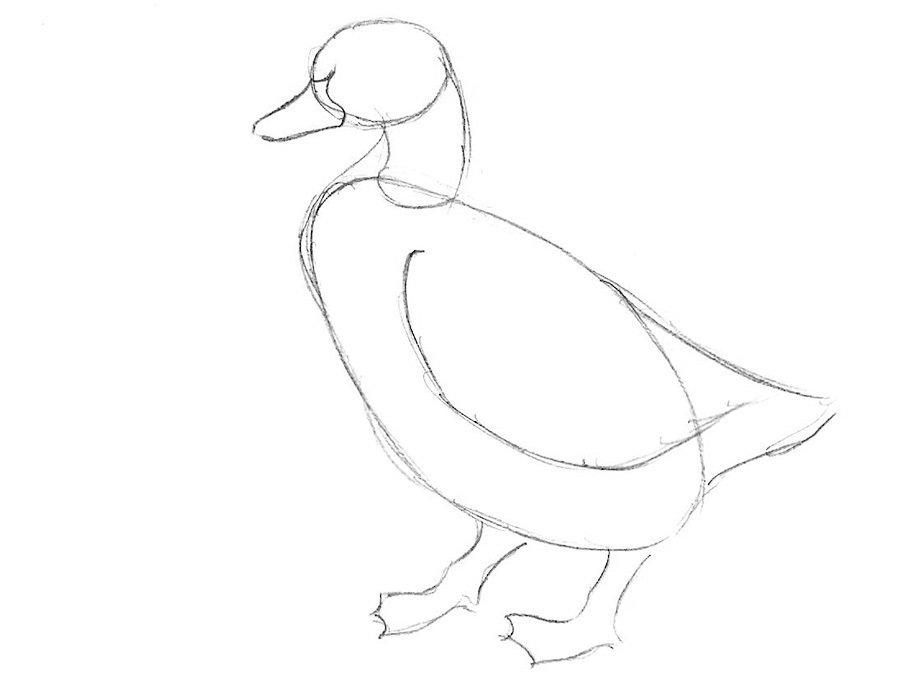 преобразят вашу картинки утки как нарисовать это тем, что