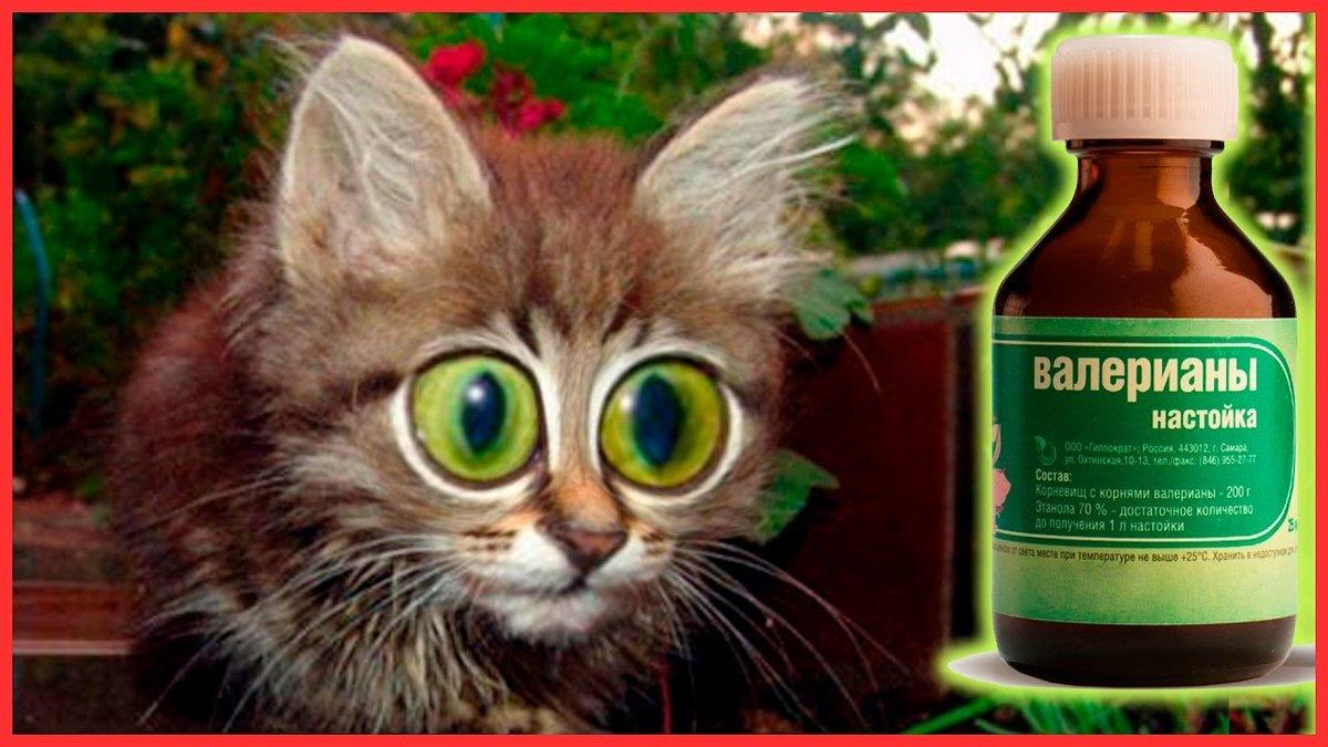 валерьянка для кота картинки если