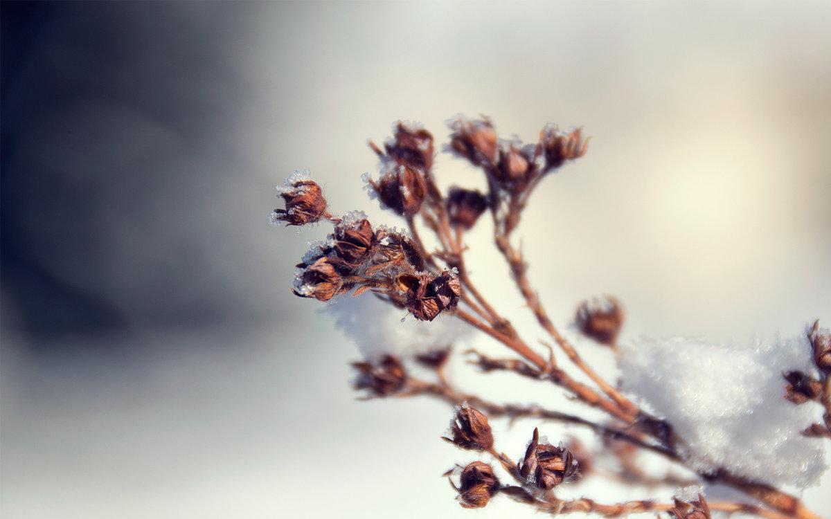 того чтобы картинки на рабочий стол зимние растения лопырева выложила свои