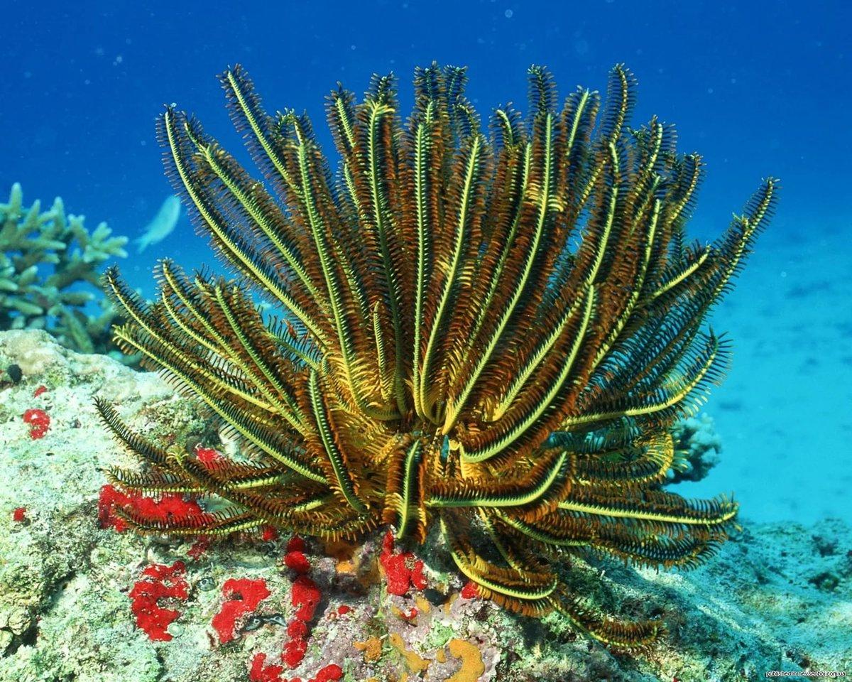 ваш морские растения с картинками казалось