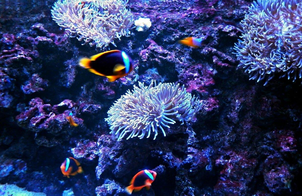 картинки дна океана с рыбками обязательно подходящие под