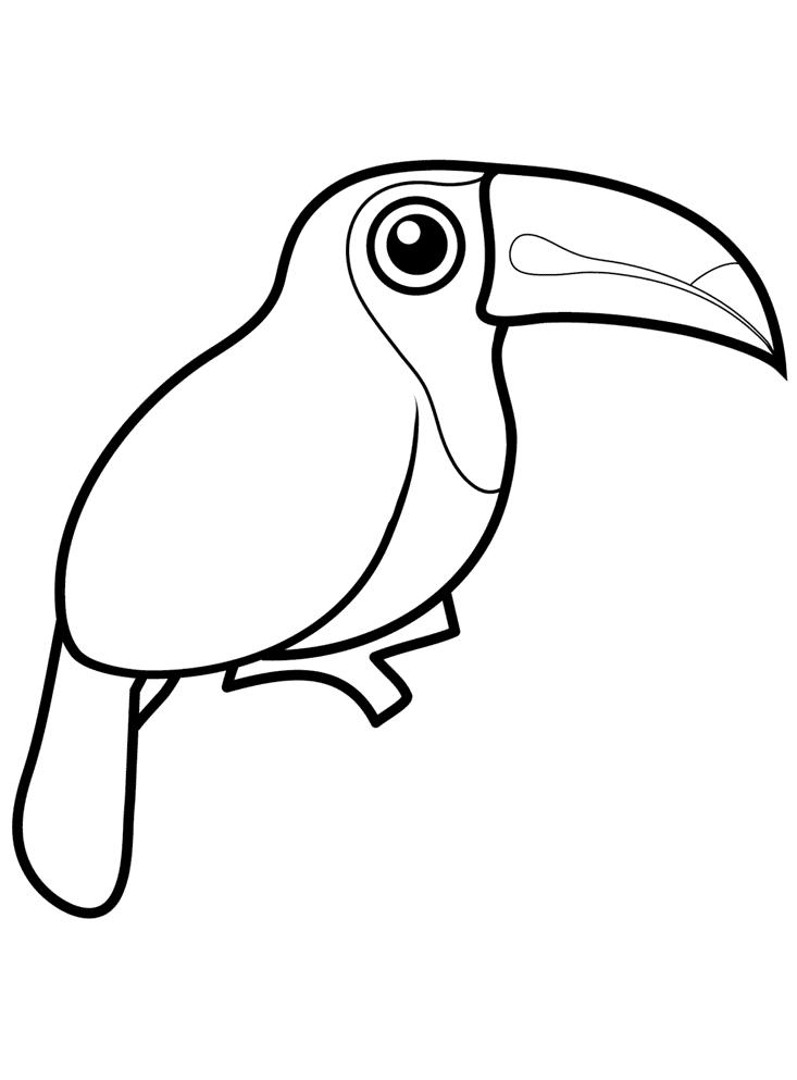 тукан птица рисунок день