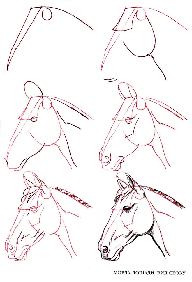Картинки с лошадьми поэтапно