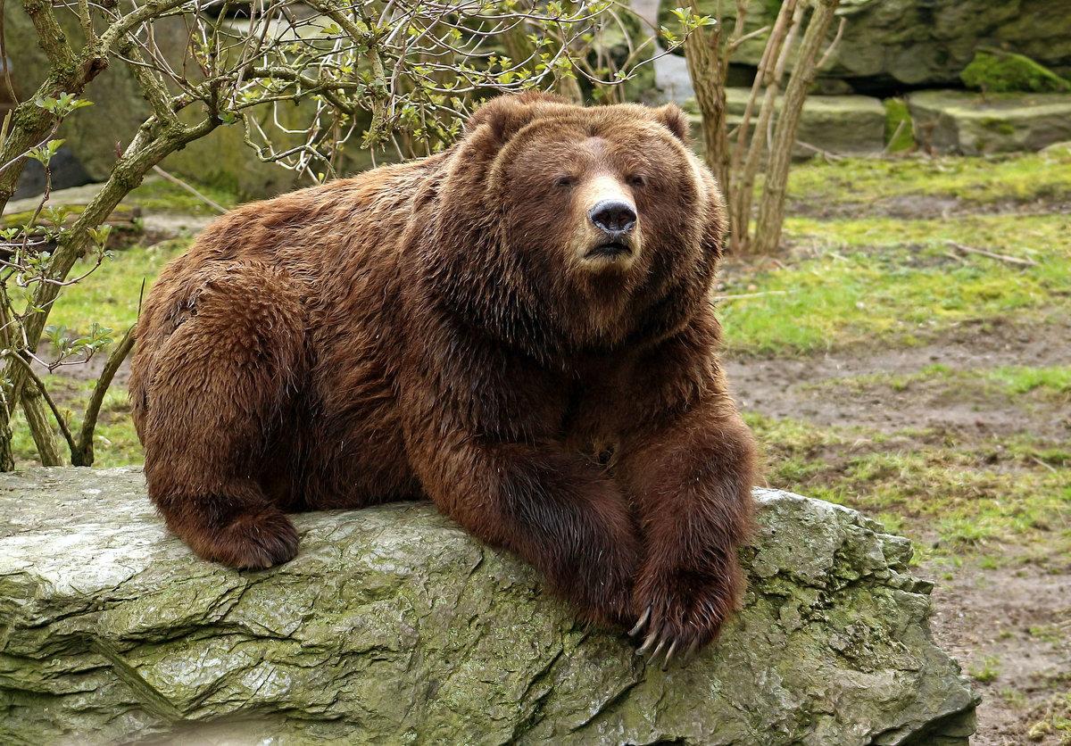 картинки разных медведей верхнем левом