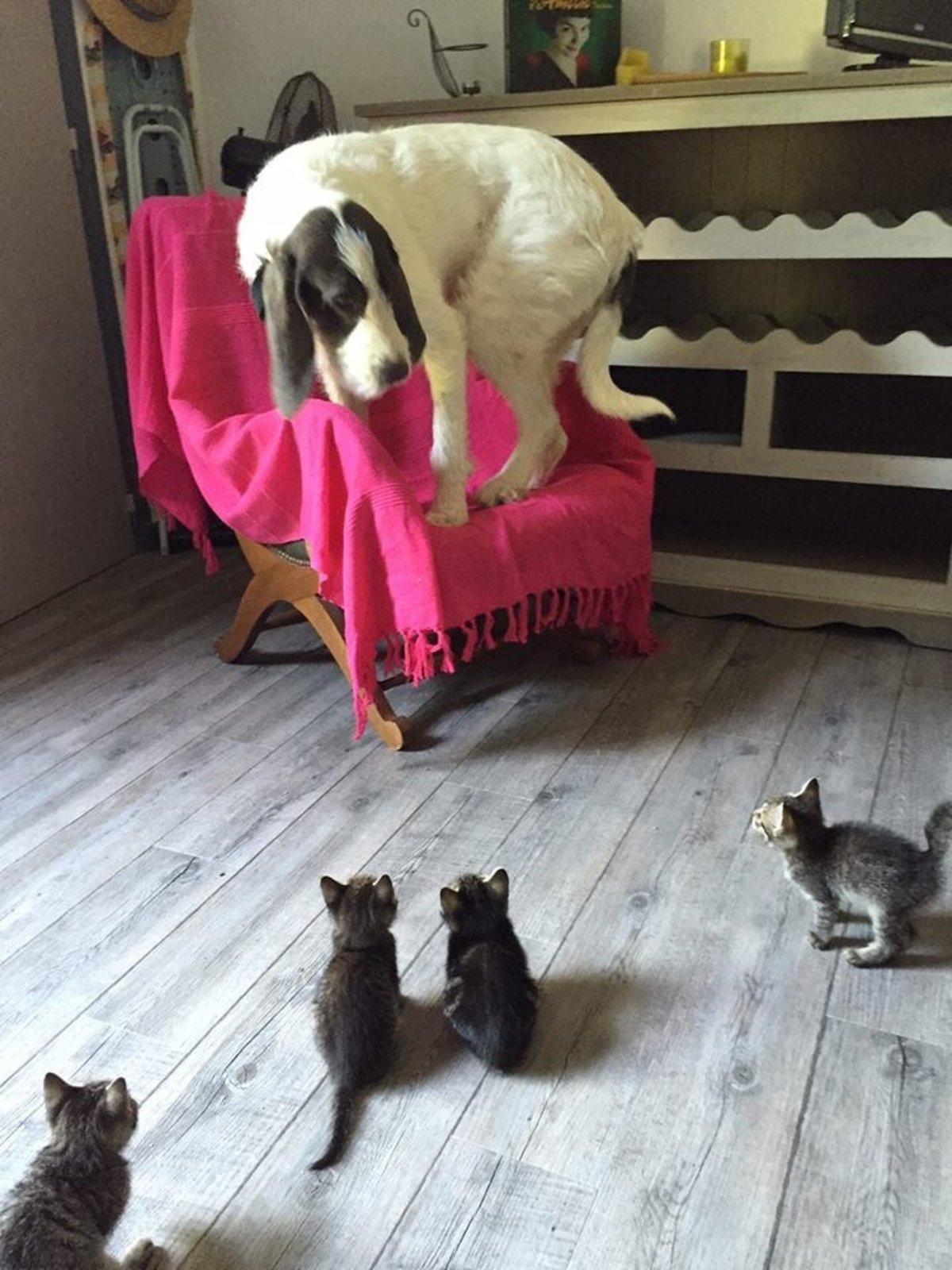 Прикольные картинки с кошкой и собакой, надписями классно
