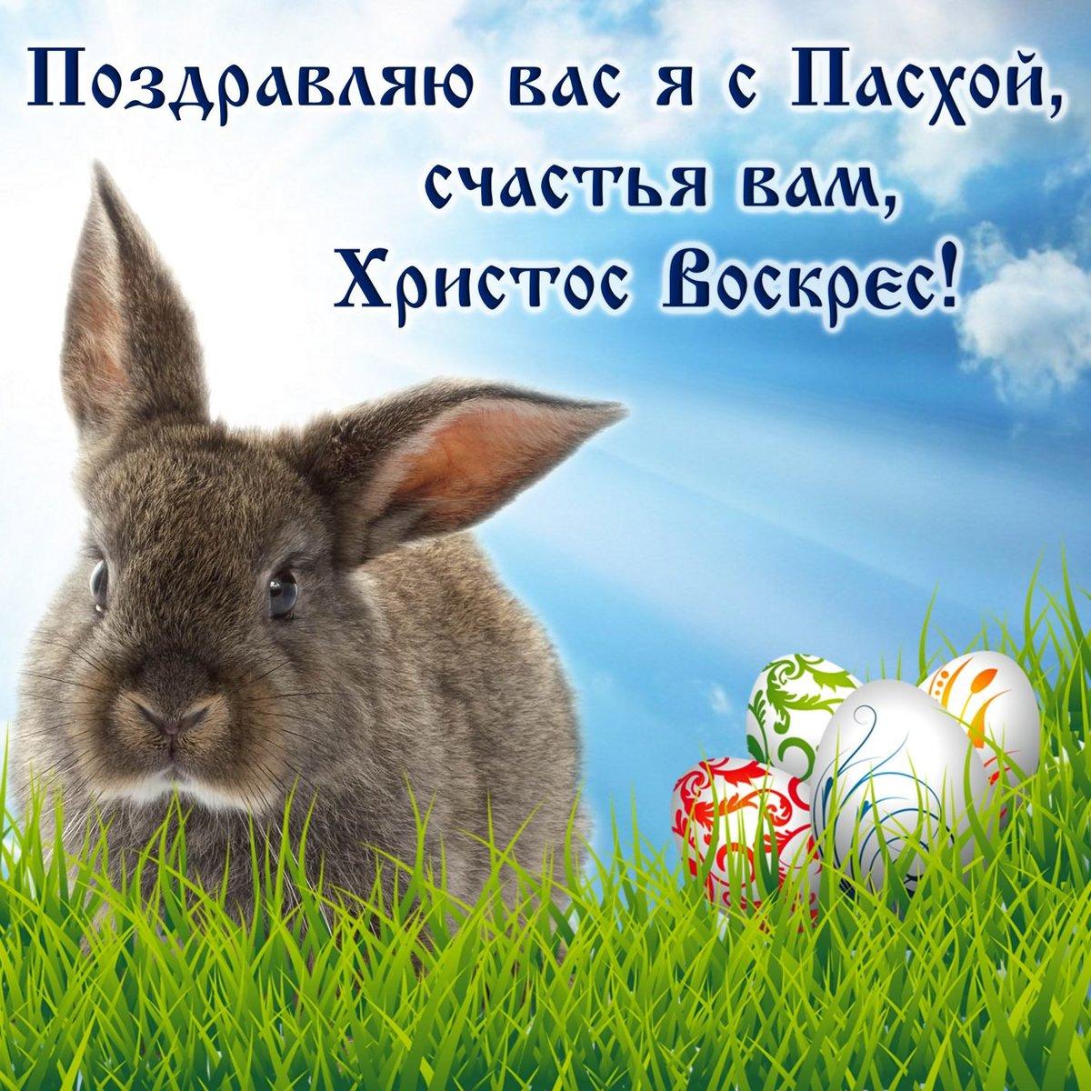 Поздравление кролика с пасхой