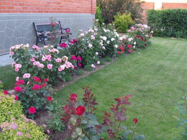 Цветники у дома фото розы