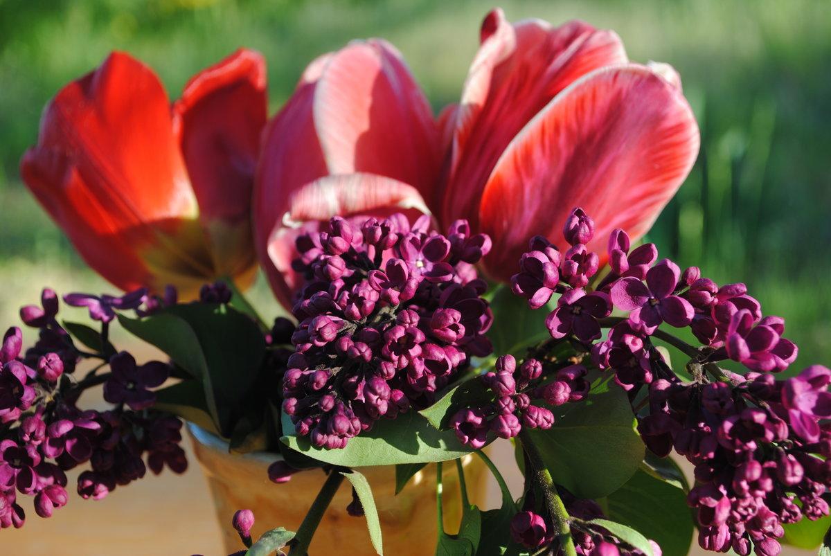 сирень и тюльпаны букет картинки это время