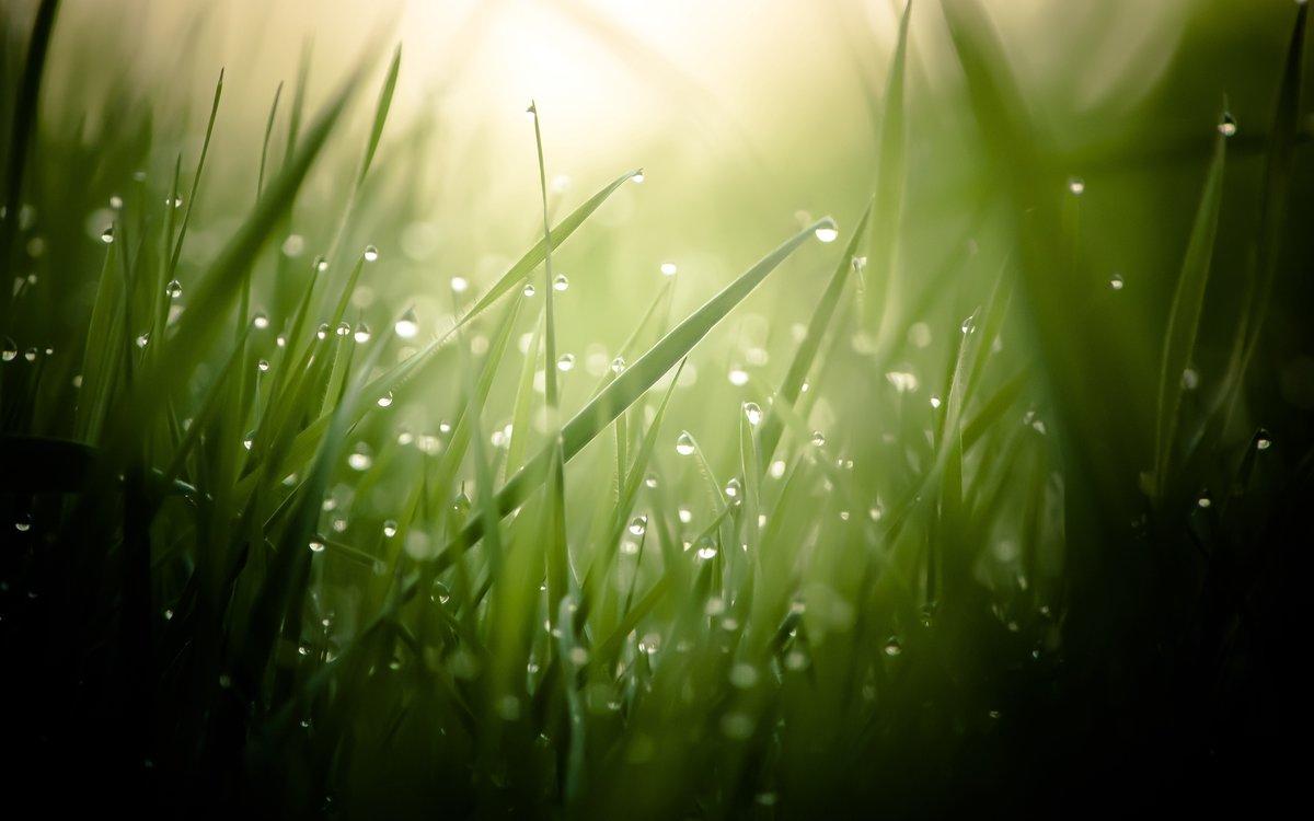 Приколы, картинки свежесть природы