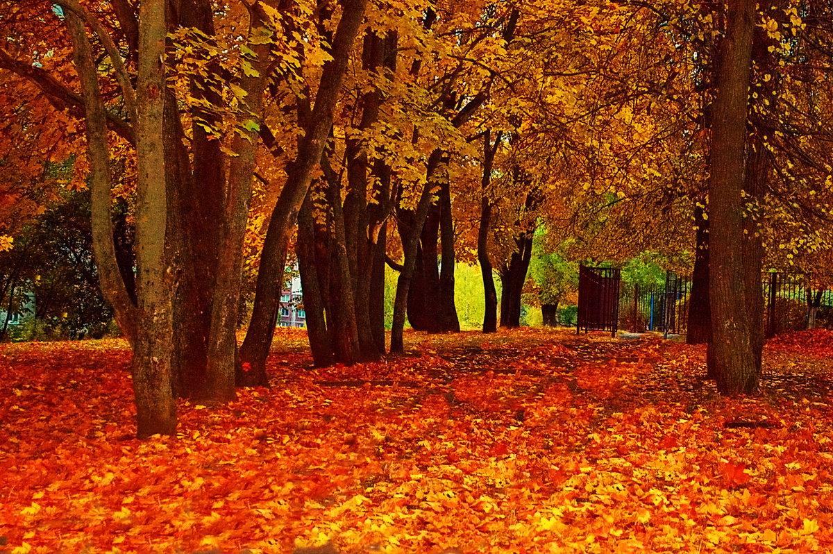 картинки осень листья падают красивые назвал остров маленькой